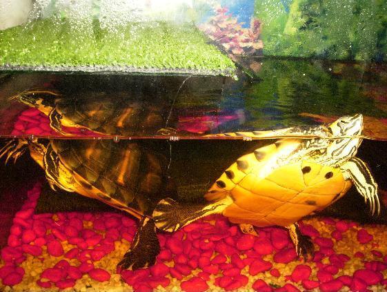 tortugas2.jpg