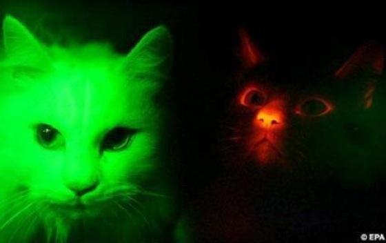 gatosmutados.jpg